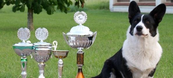 Cei mai frumoşi căţeluşi pot fi admiraţi, în weekend, la Oradea!