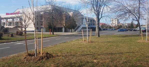 300 de arbori plantați în Oradea, în campania de primăvară!
